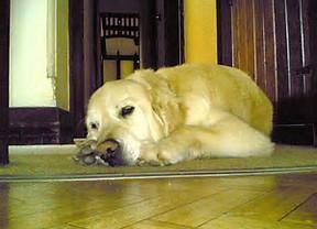 Sleeping dog (pd)